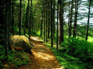 5 trails to hike this summer in the Charlotte Coastal Region